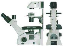 Microscopio invertido trinocular